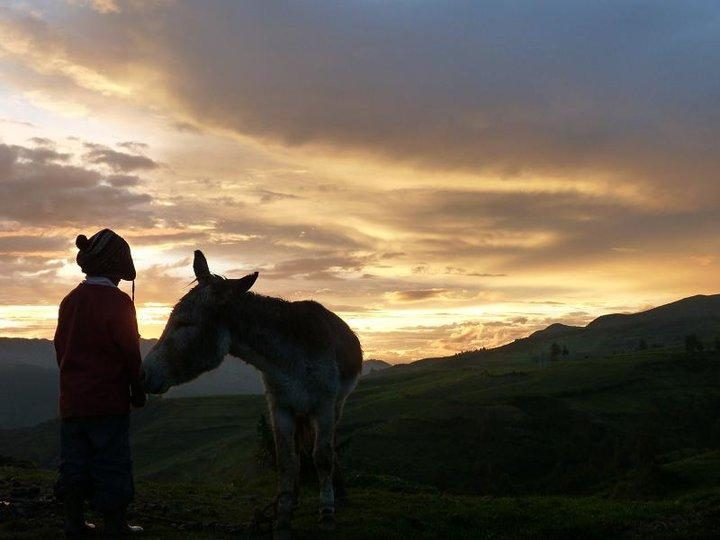 Sencca, Cusco, Peru, Chaskana Rural Guesthouse, donkey, boy, sunset